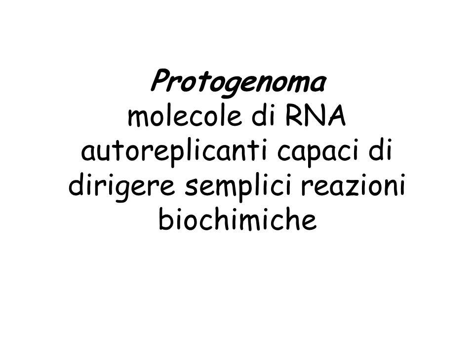 Verso un mondo a DNA sintesi di deossiNTP da riboNTP - sintetasi mutanti che incorporavano dNTP (retrotrascrittasi) - prime sintesi di DNA vantaggi del DNA - desossiribonucleotidi più stabili perché manca lOH in 2 sullo zucchero OH H