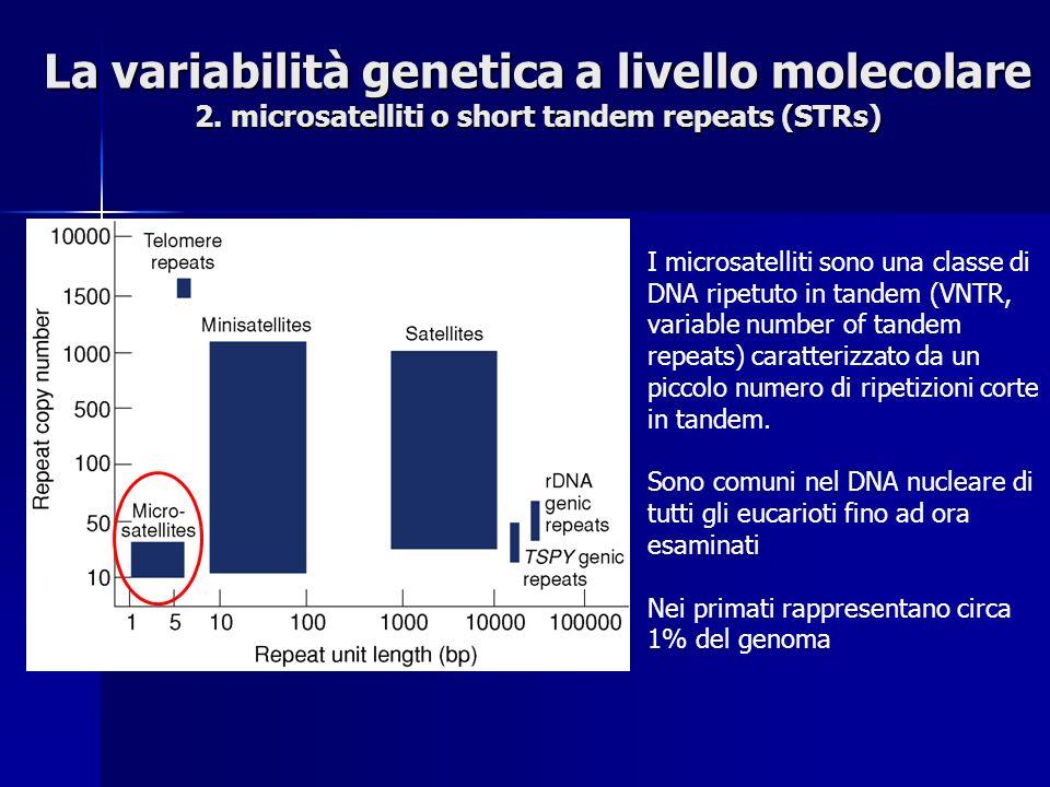 La variabilità genetica a livello molecolare 2.