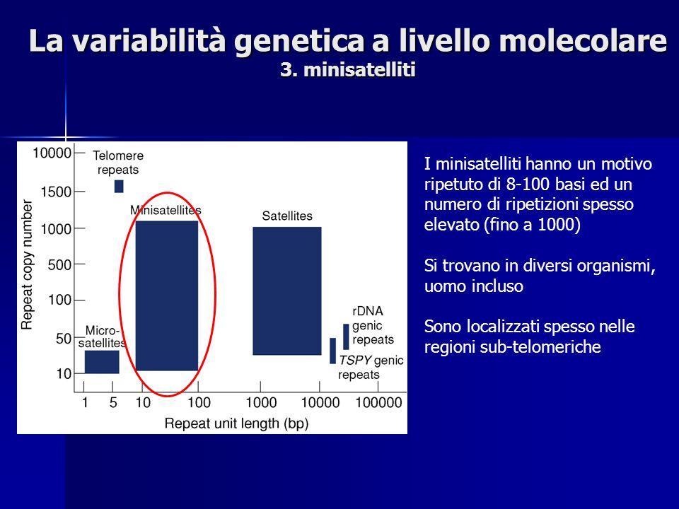La variabilità genetica a livello molecolare 3.
