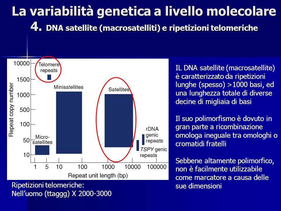 La variabilità genetica a livello molecolare 4. DNA satellite (macrosatelliti) e ripetizioni telomeriche IL DNA satellite (macrosatellite) è caratteri