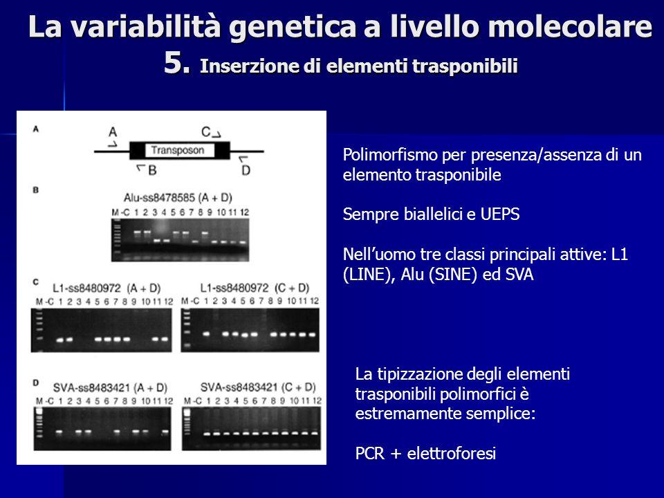 Polimorfismo per presenza/assenza di un elemento trasponibile Sempre biallelici e UEPS Nelluomo tre classi principali attive: L1 (LINE), Alu (SINE) ed SVA La variabilità genetica a livello molecolare 5.