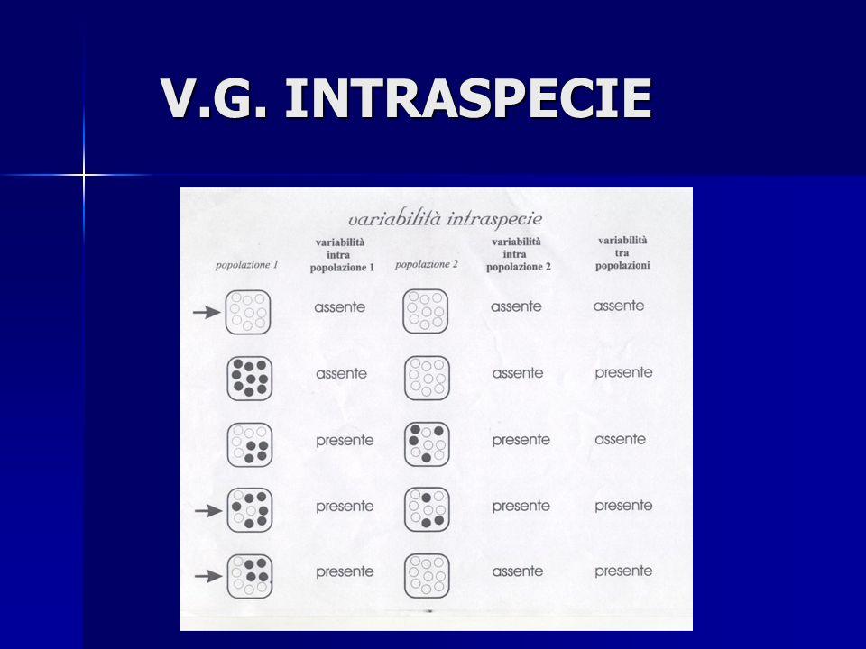 V.G. INTRASPECIE