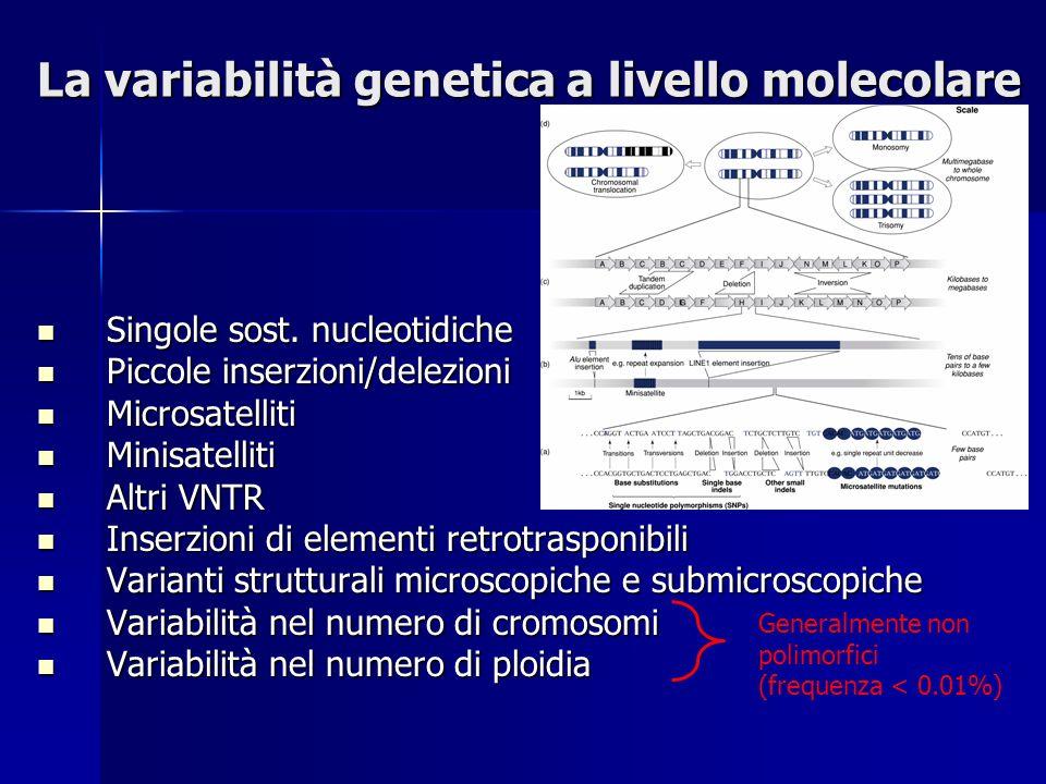 La variabilità genetica a livello molecolare Singole sost. nucleotidiche Singole sost. nucleotidiche Piccole inserzioni/delezioni Piccole inserzioni/d