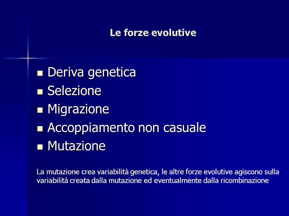 Le forze evolutive Deriva genetica Deriva genetica Selezione Selezione Migrazione Migrazione Accoppiamento non casuale Accoppiamento non casuale Mutazione Mutazione La mutazione crea variabilità genetica, le altre forze evolutive agiscono sulla variabilità creata dalla mutazione ed eventualmente dalla ricombinazione