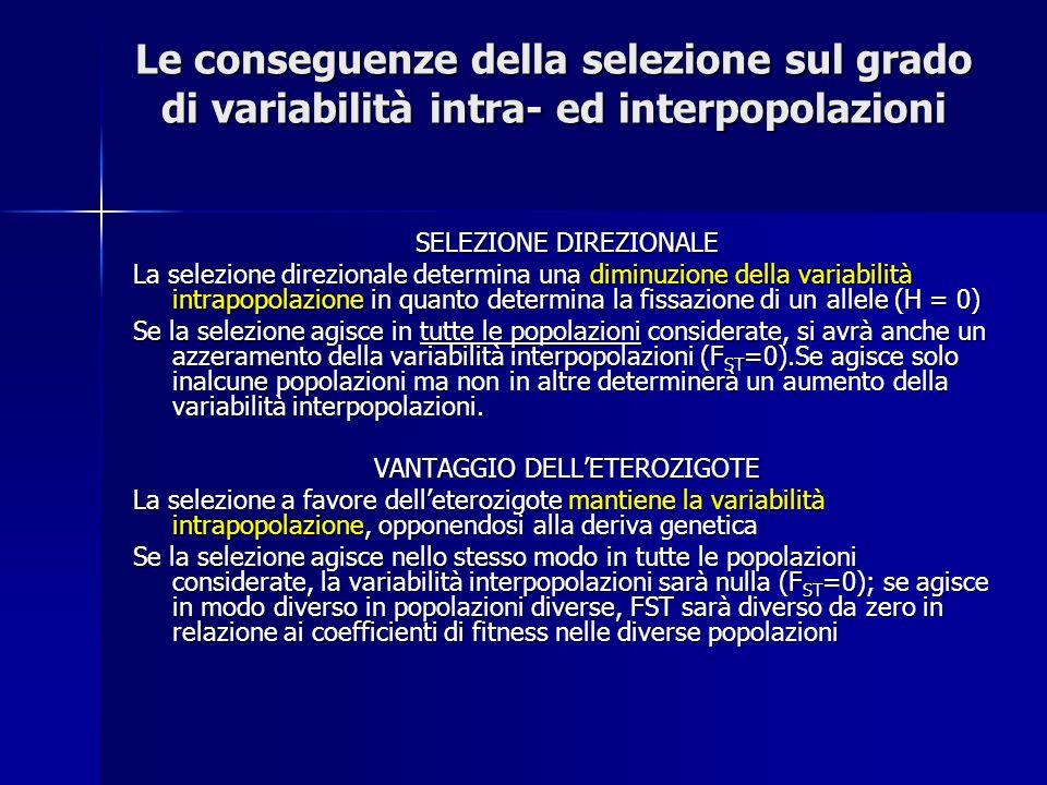 SELEZIONE DIREZIONALE La selezione direzionale determina una diminuzione della variabilità intrapopolazione in quanto determina la fissazione di un allele (H = 0) Se la selezione agisce in tutte le popolazioni considerate, si avrà anche un azzeramento della variabilità interpopolazioni (F ST =0).Se agisce solo inalcune popolazioni ma non in altre determinerà un aumento della variabilità interpopolazioni.