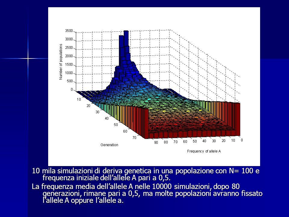 10 mila simulazioni di deriva genetica in una popolazione con N= 100 e frequenza iniziale dellallele A pari a 0,5.