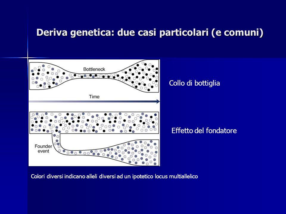 Deriva genetica: due casi particolari (e comuni) Collo di bottiglia Effetto del fondatore Colori diversi indicano alleli diversi ad un ipotetico locus multiallelico