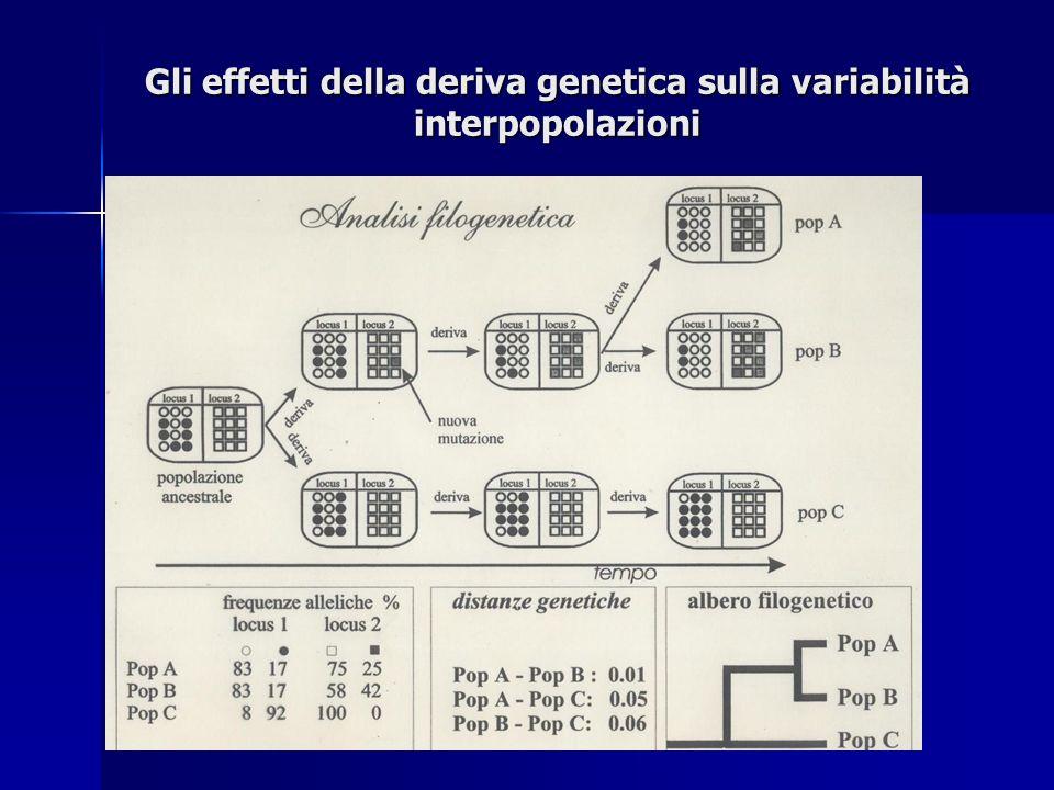 Gli effetti della deriva genetica sulla variabilità interpopolazioni + +++ ++++