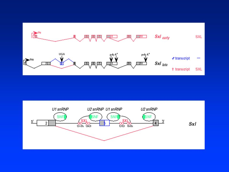 Trasmissione del segnale primario ed esecuzione del programma