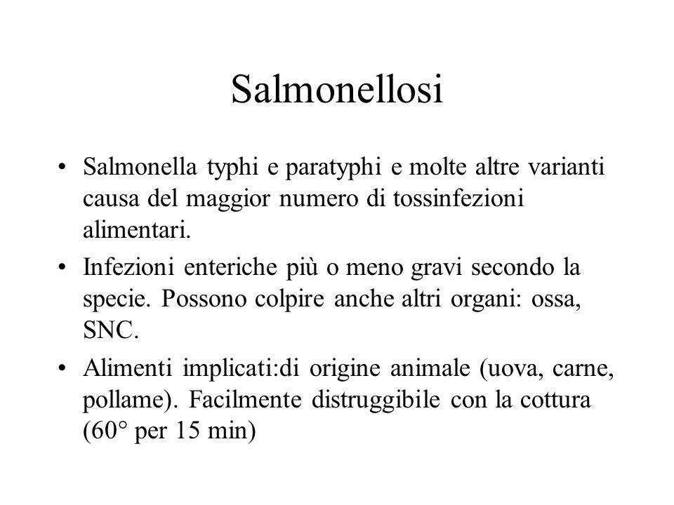 Salmonellosi Salmonella typhi e paratyphi e molte altre varianti causa del maggior numero di tossinfezioni alimentari. Infezioni enteriche più o meno