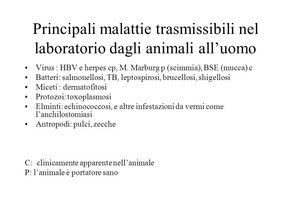 Principali malattie trasmissibili nel laboratorio dagli animali alluomo Virus : HBV e herpes cp, M. Marburg p (scimmia), BSE (mucca) c Batteri: salmon