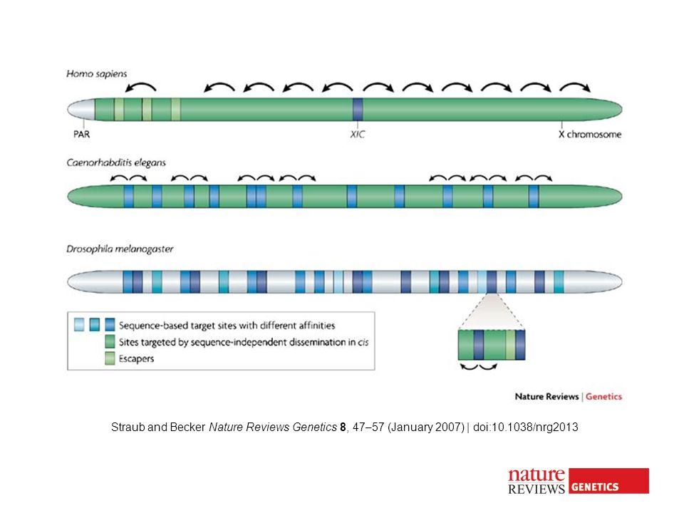 Straub and Becker Nature Reviews Genetics 8, 47–57 (January 2007) | doi:10.1038/nrg2013