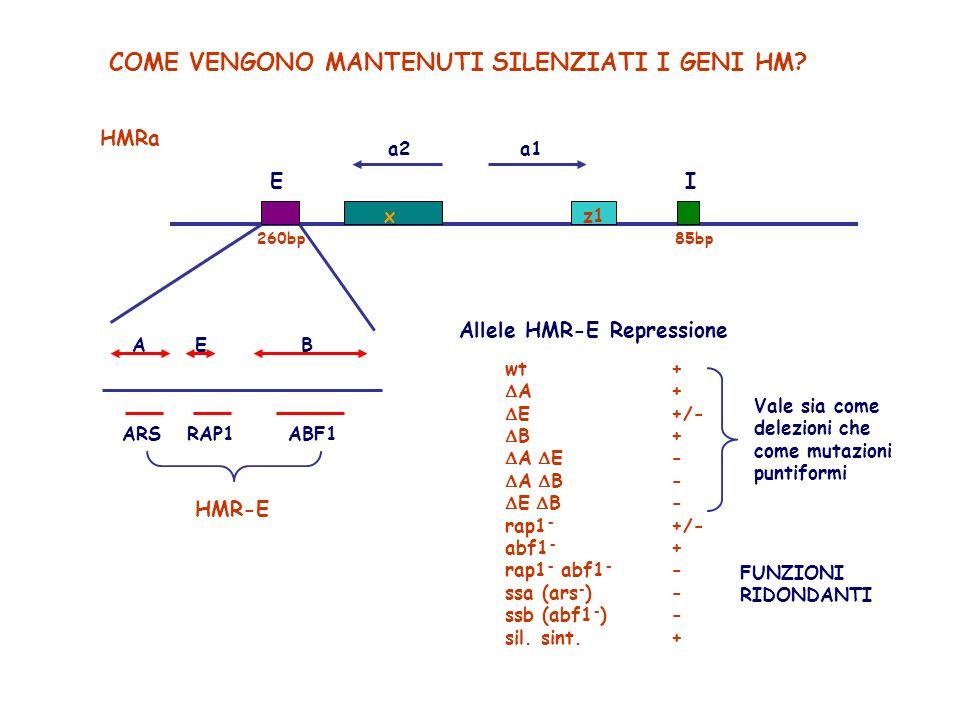 SILENCER E così definito per analogia con gli elementi Enhancer: Può funzionare a distanze variabili dal suo gene bersaglio La sua attività è indipendente dallorientamento della sequenza Delezioni di HMR-E : TOTALE DEREPRESSIONE Delezioni di HMR-I : MINORE DEREPRESSIONE Delezioni di HML-E ed HML-I : singolarmente non hanno forti effetti ma INSIEME danno TOTALE DEREPRESSIONE La sostituzione dellintera regione codificante di HM con altri geni, sia della RNA PolII (URA, LEU), sia della RNA PolIII (tRNA), comporta la completa REPRESSIONE dei geni sostituiti.