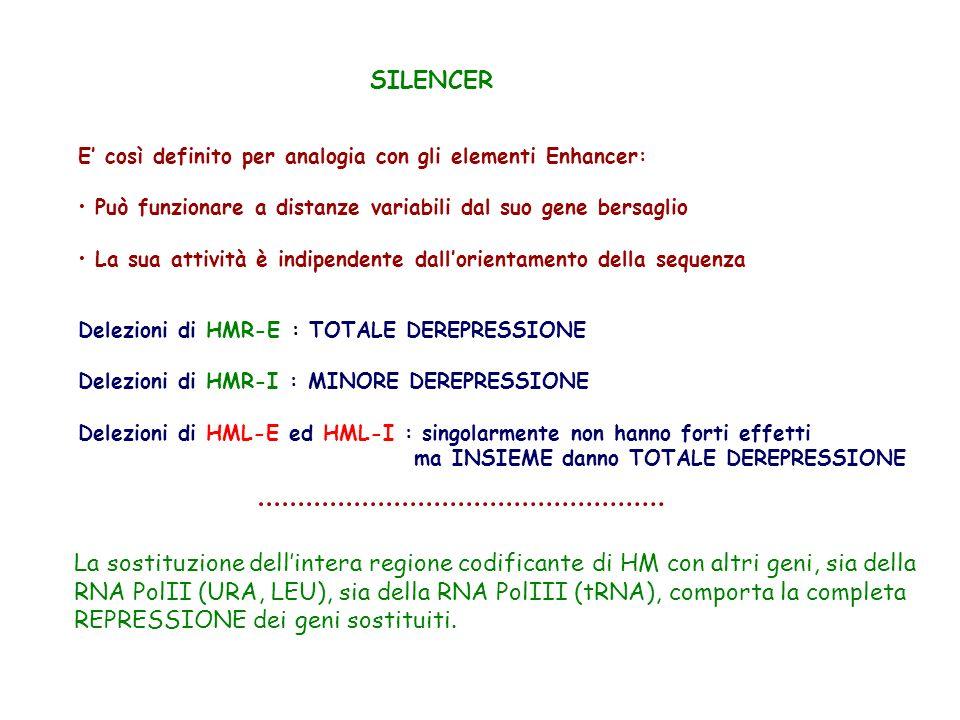 SILENCER E così definito per analogia con gli elementi Enhancer: Può funzionare a distanze variabili dal suo gene bersaglio La sua attività è indipend