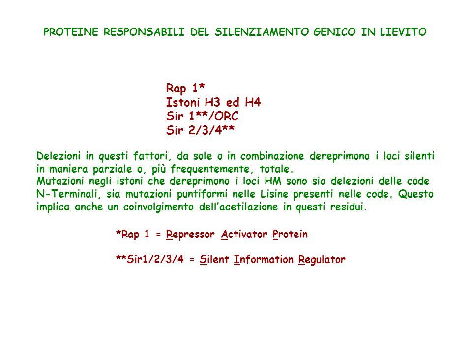SIR3 REGIONE SILENZIATRICE REGIONE SILENZIATRICE LOCUS SILENTE HM Prova genetica dellinterazione tra SIR3 e H4 Delezione degli aa.