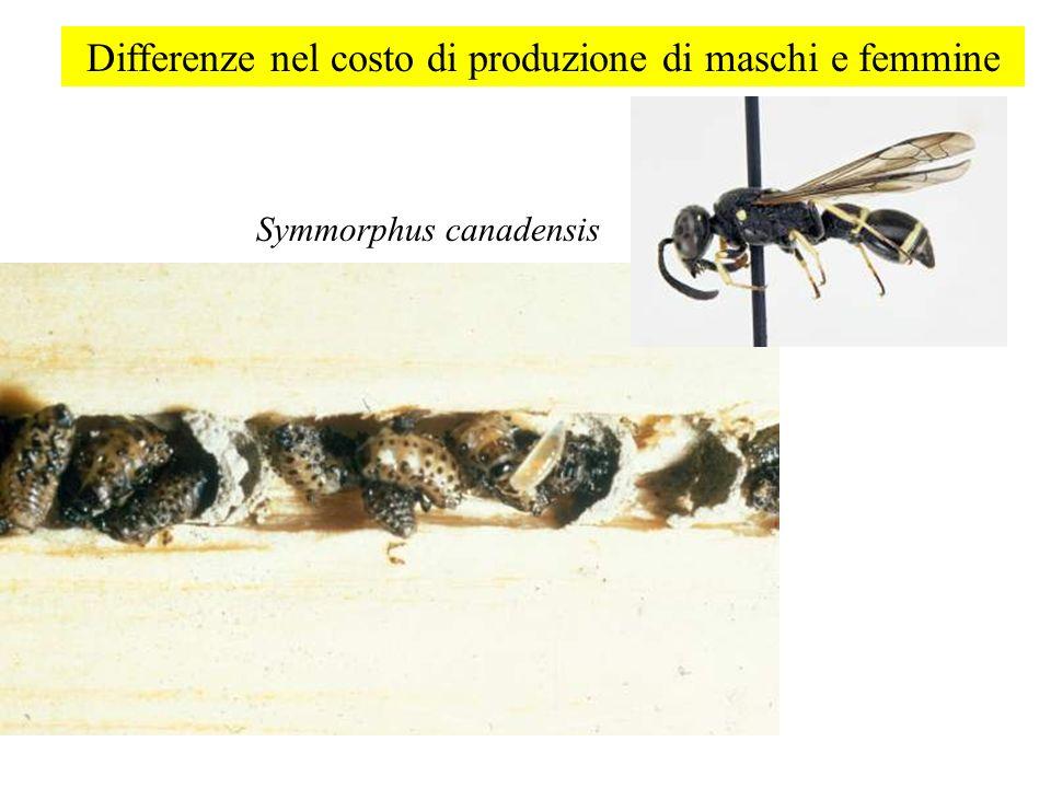 Differenze nel costo di produzione di maschi e femmine Symmorphus canadensis