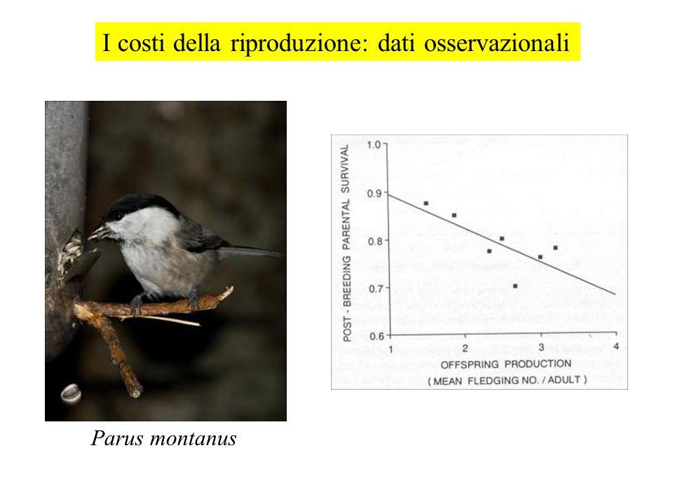 I costi della riproduzione: dati osservazionali Parus montanus