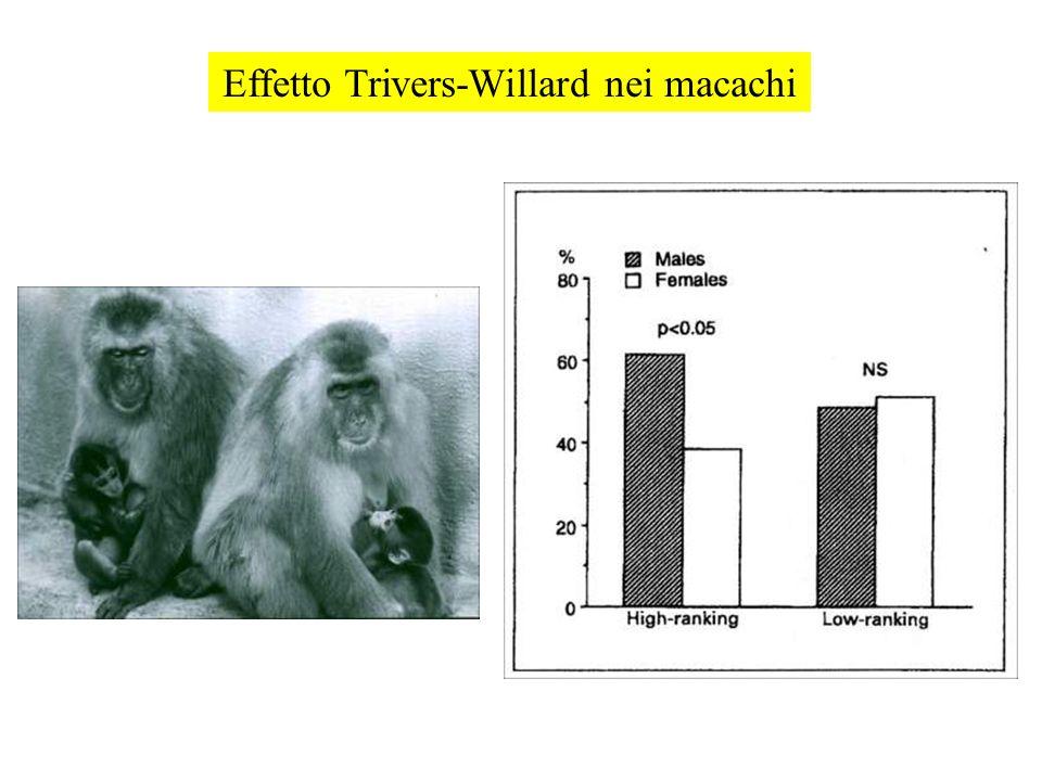 Effetto Trivers-Willard nei macachi