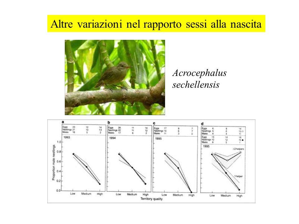 Acrocephalus sechellensis Altre variazioni nel rapporto sessi alla nascita