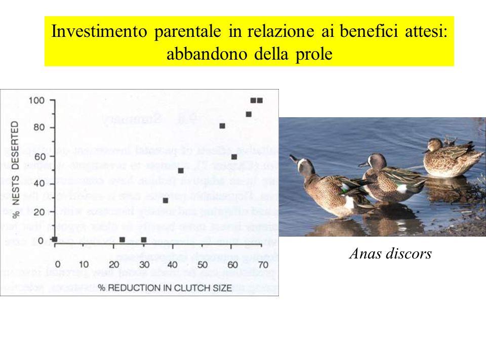 Investimento parentale in relazione ai benefici attesi: abbandono della prole Anas discors