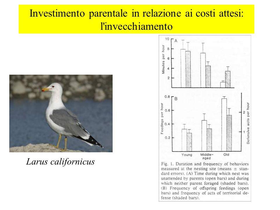 Investimento parentale in relazione ai costi attesi: l'invecchiamento Larus californicus