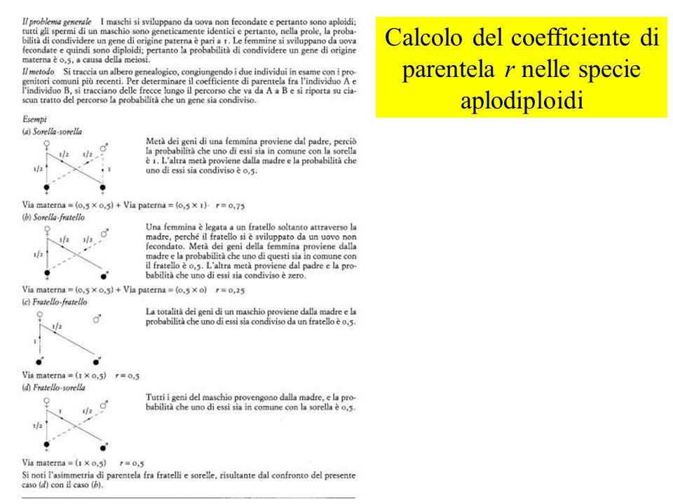 Calcolo del coefficiente di parentela r nelle specie aplodiploidi
