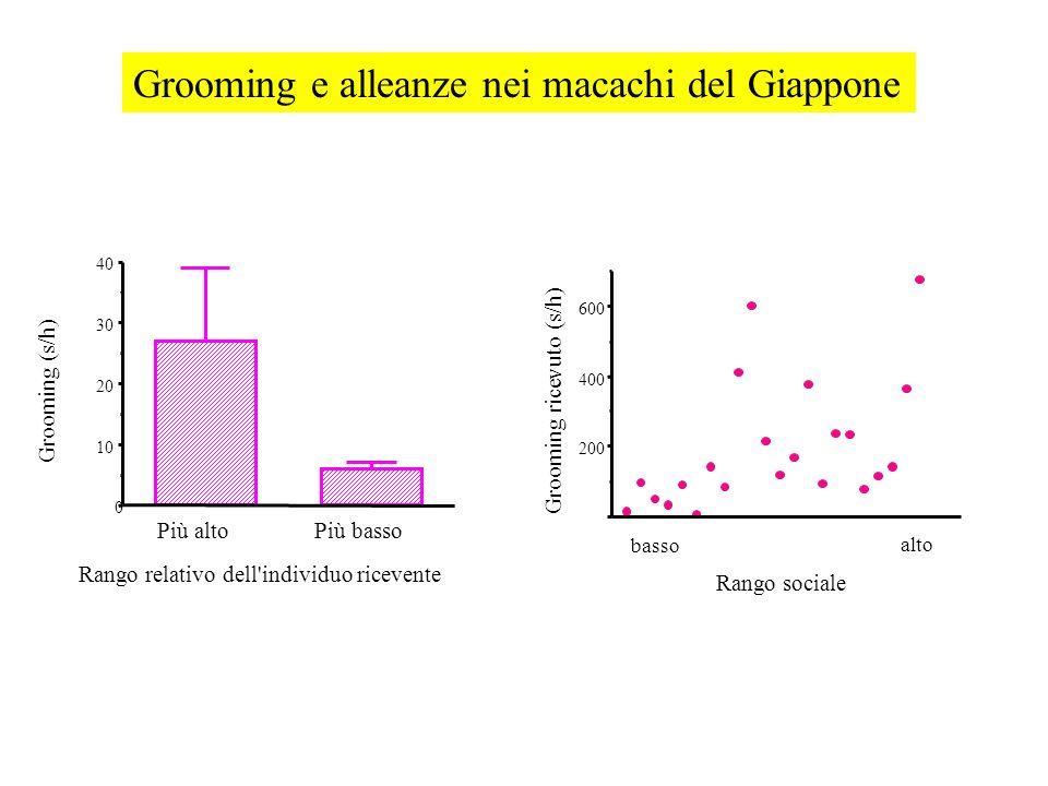 Rango relativo dell'individuo ricevente Più altoPiù basso 0 10 20 30 40 Grooming (s/h) 200 400 600 Rango sociale basso alto Grooming ricevuto (s/h)