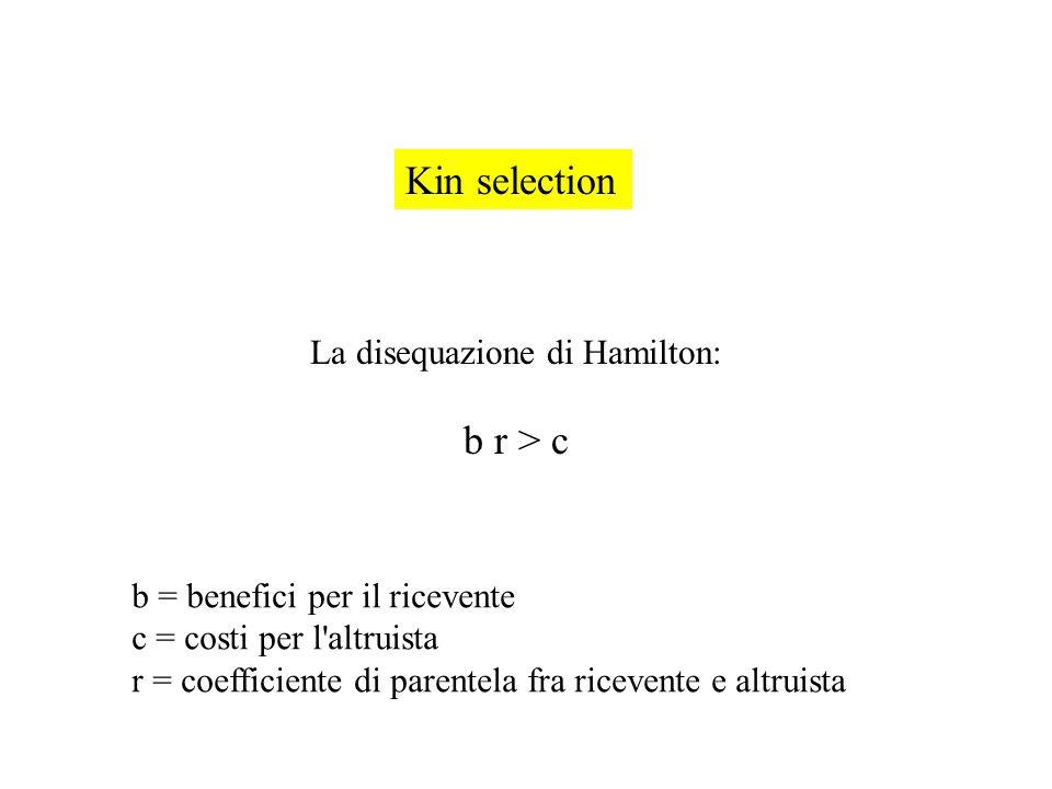 Kin selection La disequazione di Hamilton: b r > c b = benefici per il ricevente c = costi per l'altruista r = coefficiente di parentela fra ricevente