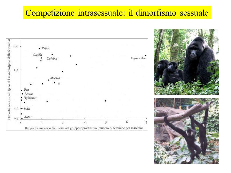 Competizione intrasessuale: il dimorfismo sessuale