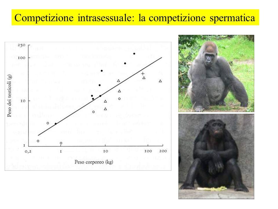 Competizione intrasessuale: la competizione spermatica