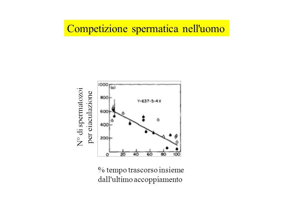 % tempo trascorso insieme dall ultimo accoppiamento N° di spermatozoi per eiaculazione Competizione spermatica nell uomo