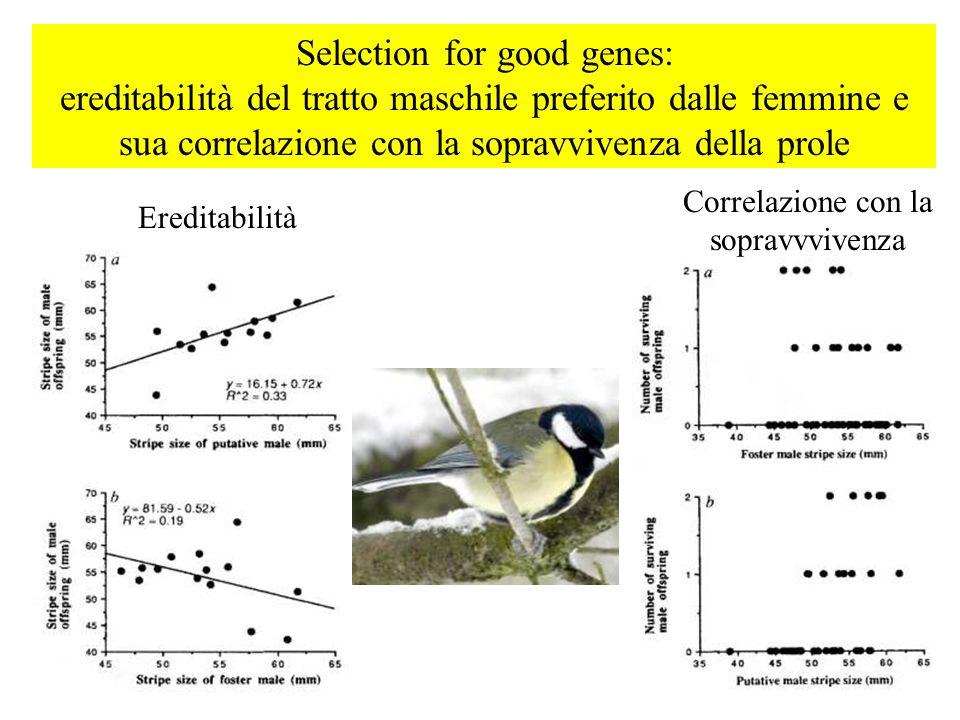 Selection for good genes: ereditabilità del tratto maschile preferito dalle femmine e sua correlazione con la sopravvivenza della prole Ereditabilità Correlazione con la sopravvvivenza