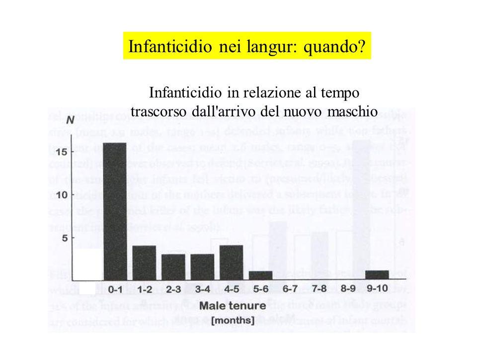 Infanticidio nei langur: quando.
