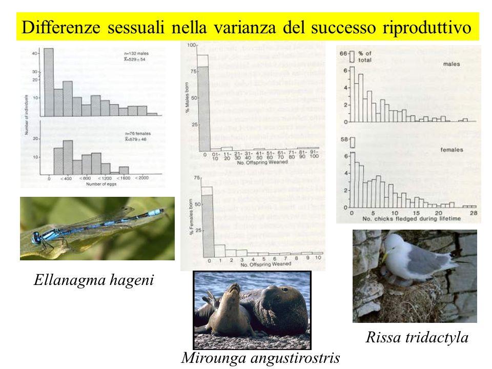 Differenze sessuali nella varianza del successo riproduttivo Rissa tridactyla Mirounga angustirostris Ellanagma hageni