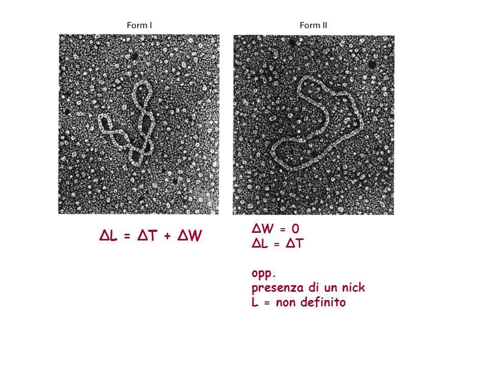 ΔL = ΔT + ΔW ΔW = 0 ΔL = ΔT opp. presenza di un nick L = non definito