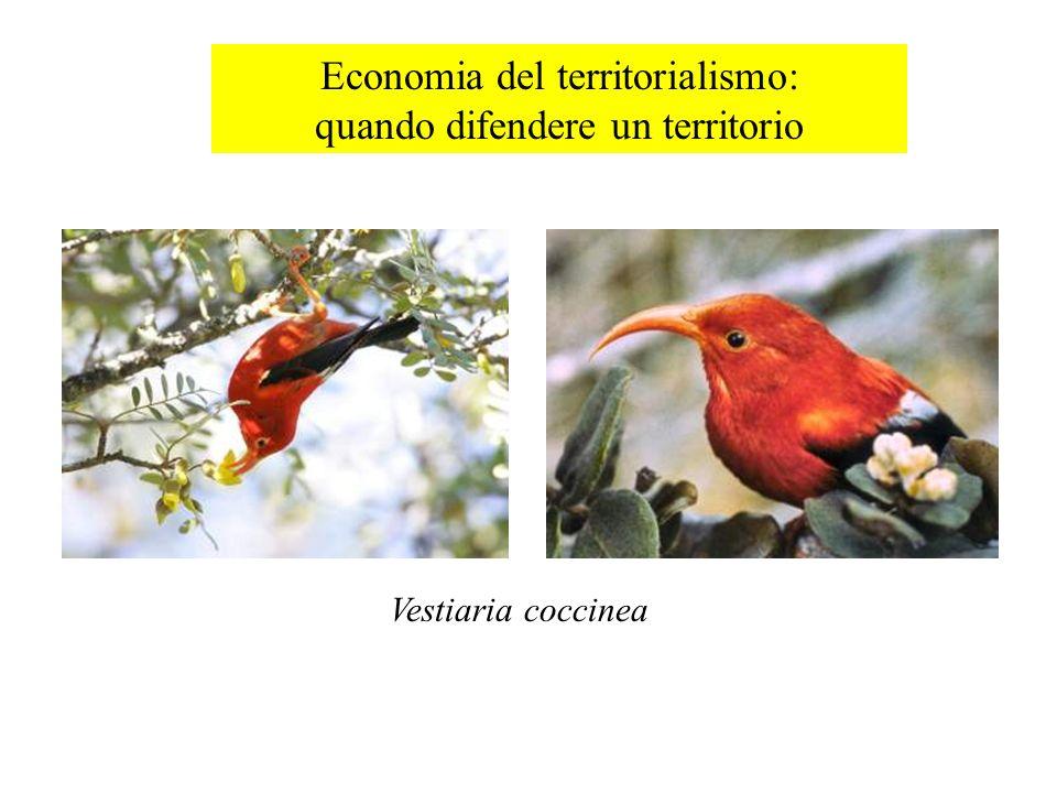 Economia del territorialismo: quando difendere un territorio Vestiaria coccinea