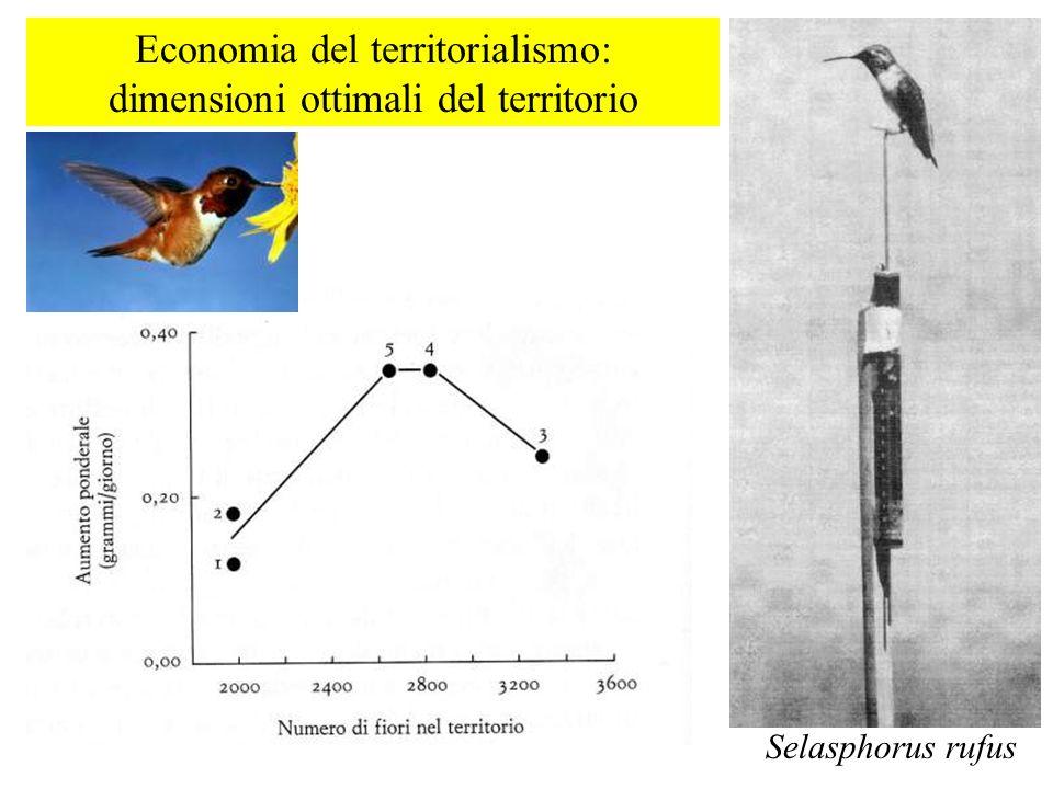 Economia del territorialismo: dimensioni ottimali del territorio Selasphorus rufus