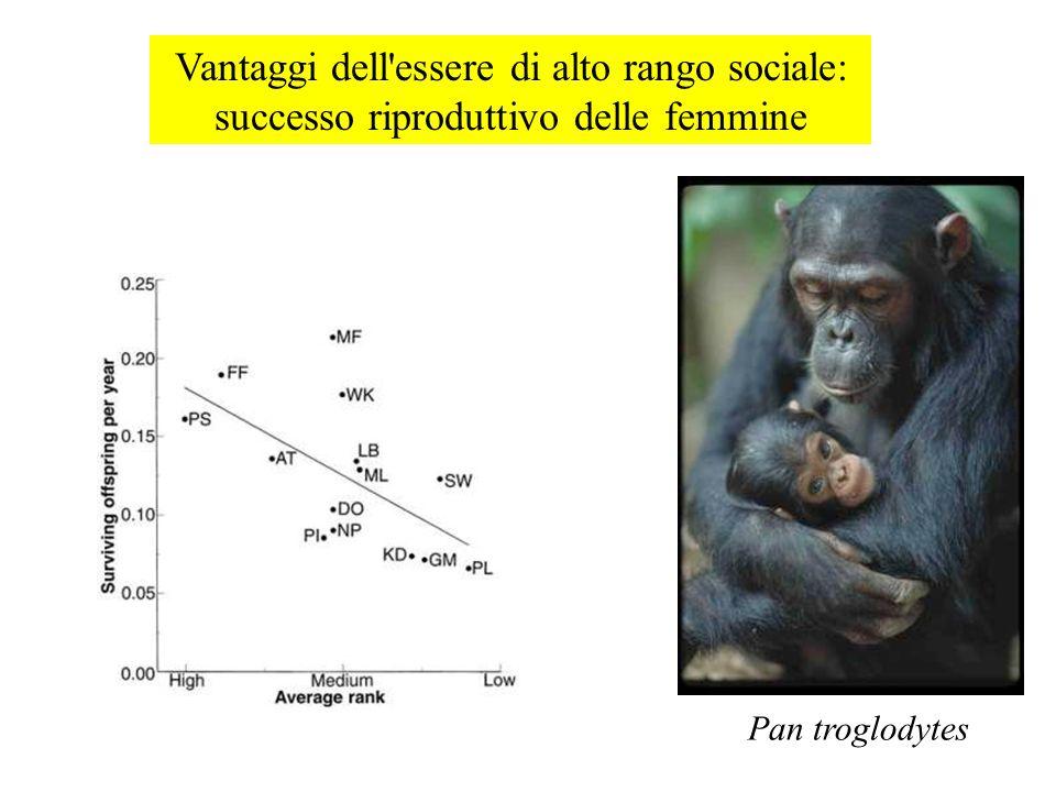 Vantaggi dell essere di alto rango sociale: successo riproduttivo delle femmine Pan troglodytes