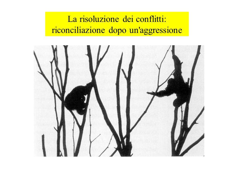 La risoluzione dei conflitti: riconciliazione dopo un aggressione