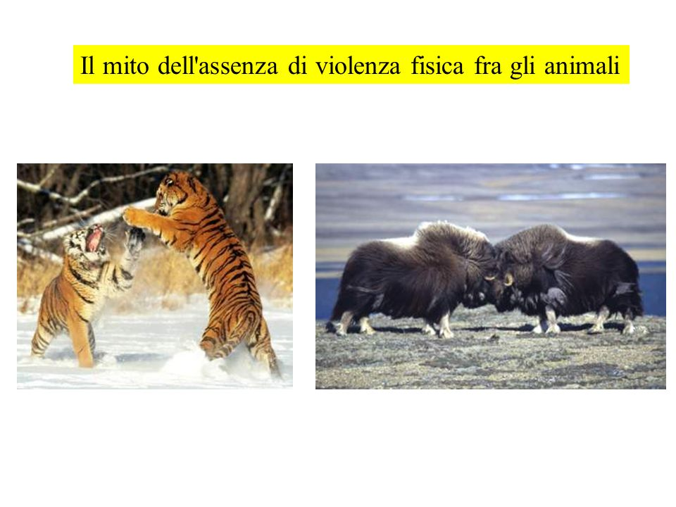 Il mito dell'assenza di violenza fisica fra gli animali