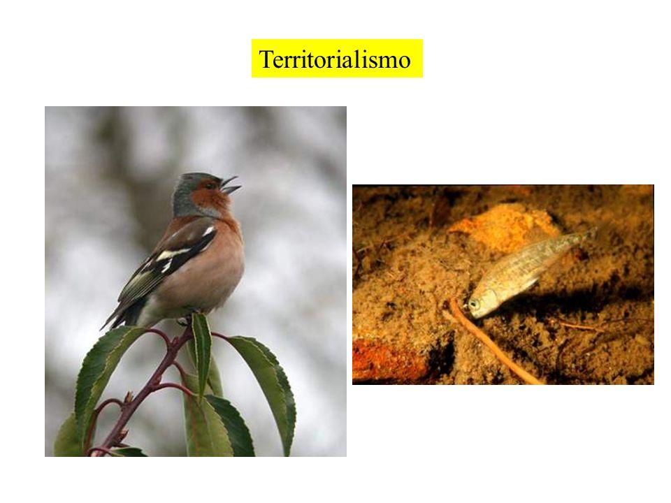 Vantaggi del territorialismo Pterocomma populifoliae