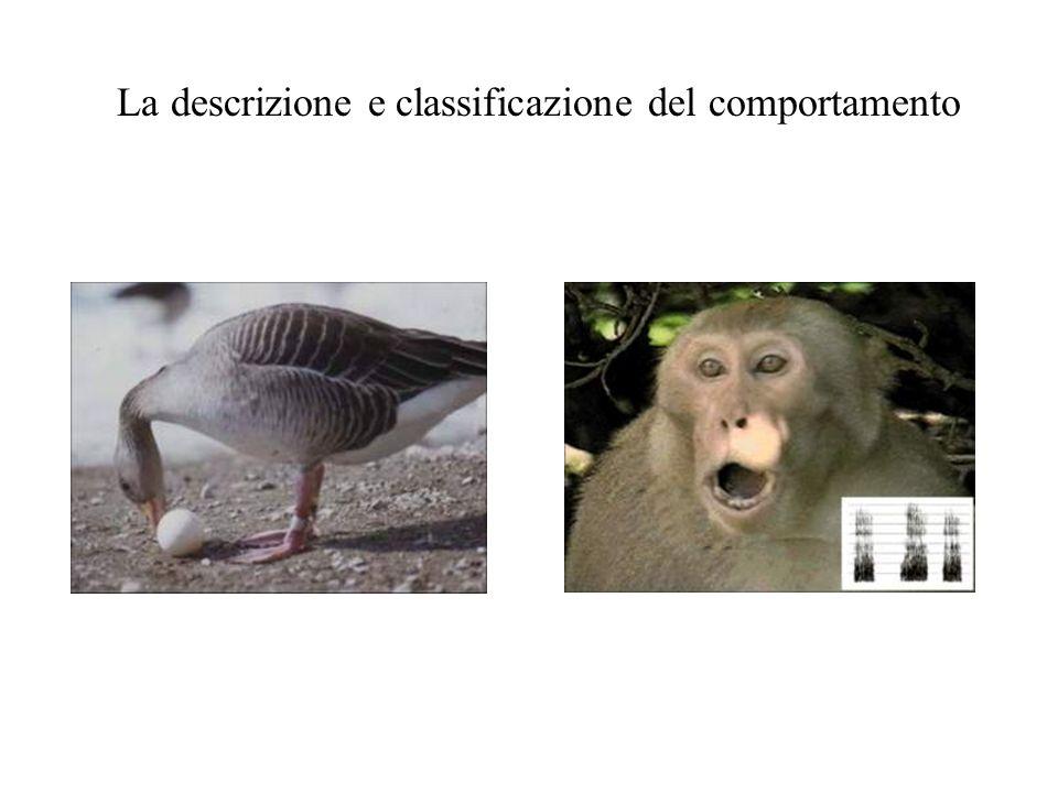 La descrizione e classificazione del comportamento