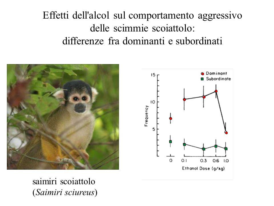 Effetti dell'alcol sul comportamento aggressivo delle scimmie scoiattolo: differenze fra dominanti e subordinati saimiri scoiattolo (Saimiri sciureus)