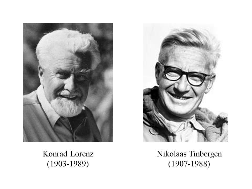 Konrad Lorenz (1903-1989) Nikolaas Tinbergen (1907-1988)