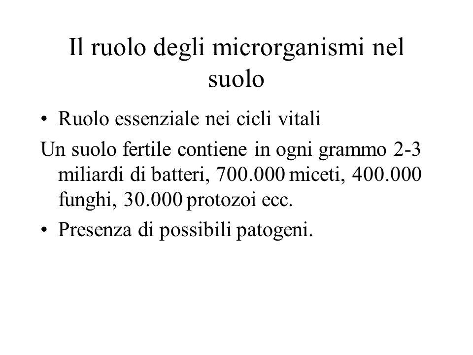 Il ruolo degli microrganismi nel suolo Ruolo essenziale nei cicli vitali Un suolo fertile contiene in ogni grammo 2-3 miliardi di batteri, 700.000 mic