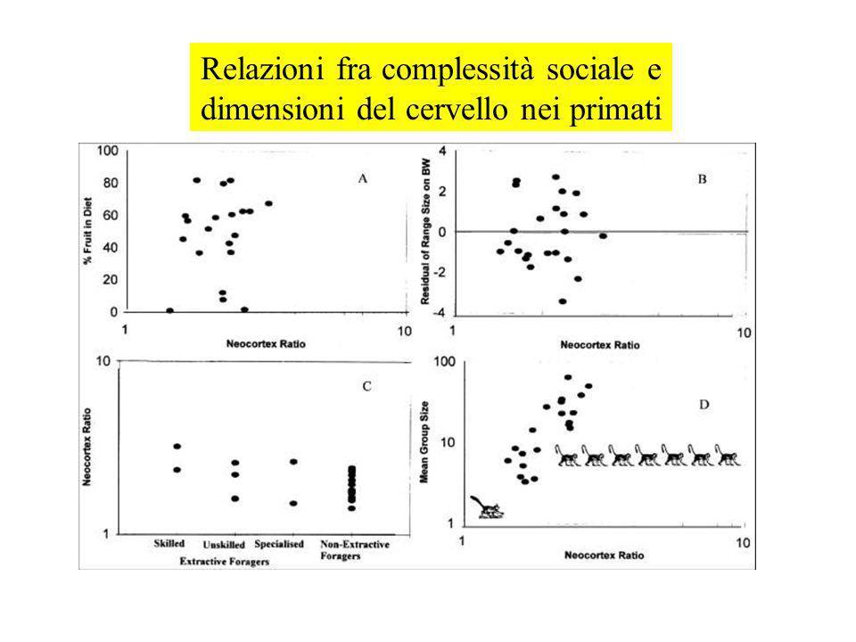 Relazioni fra complessità sociale e dimensioni del cervello nei primati