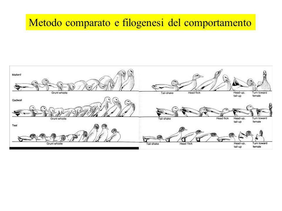 Metodo comparato e filogenesi del comportamento