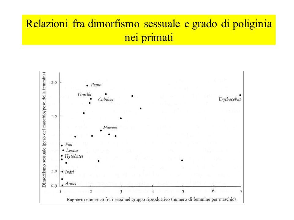 Relazioni fra dimorfismo sessuale e grado di poliginia nei primati