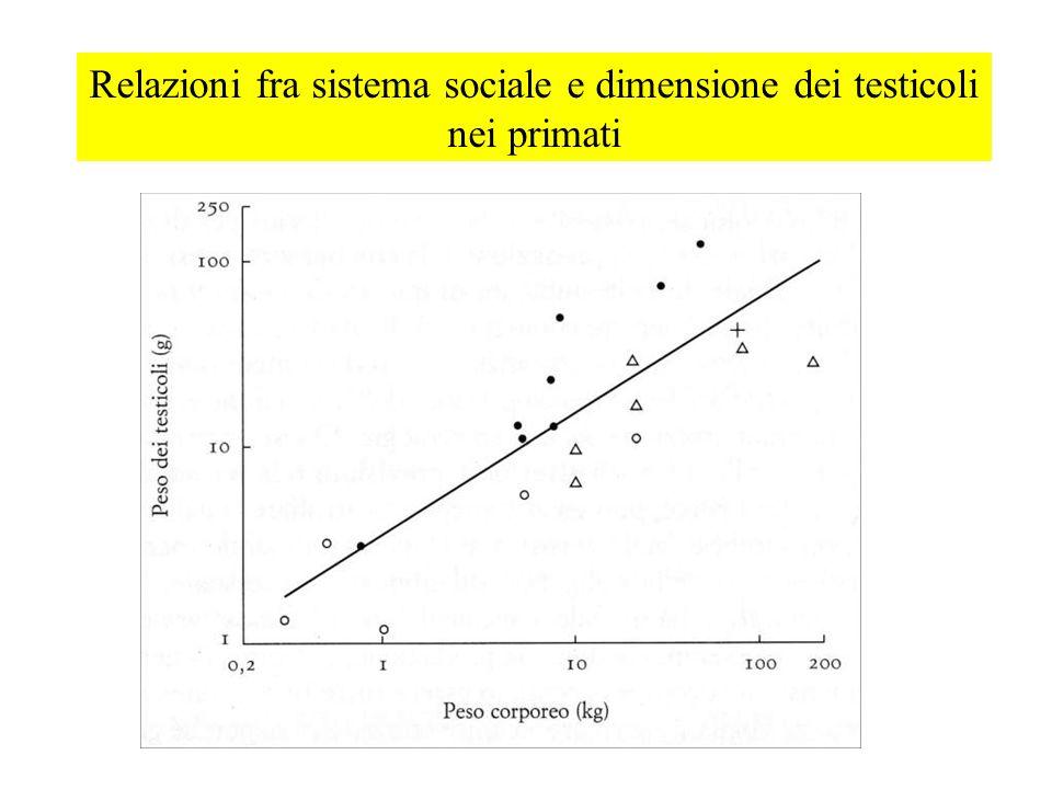 Relazioni fra sistema sociale e dimensione dei testicoli nei primati