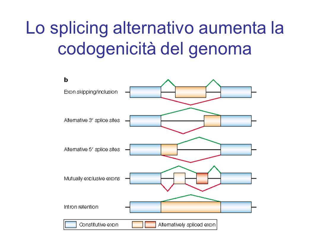 Lo splicing alternativo aumenta la codogenicità del genoma